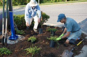 Len Pardue helps his fellow garden club member plant native ground cover.