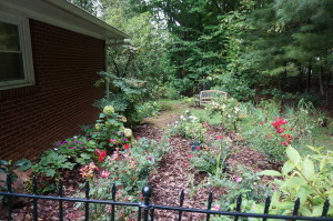 Next came the planting of hydrangea and roses.