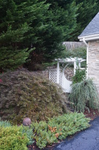 Guarded by a superb Japanese maple on one side and a cascading spruce on the other this garden gate is the entrance Ralph Lambert's world of color and design.