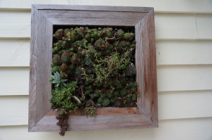Wall Succulents by Ed Smith and Don Ziermann of East Flat Rock, NC